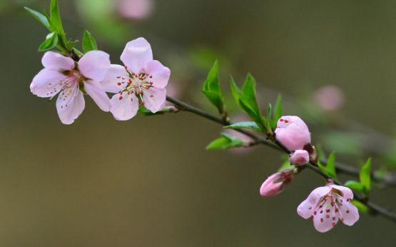 春分养生做好四点!